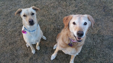 Annie and Coco. Annie gone but never forgotten..
