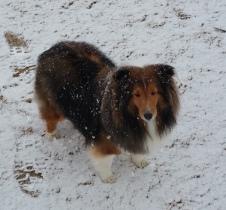 Snowy Bree