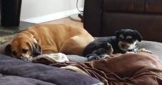 Dexter and Reggie