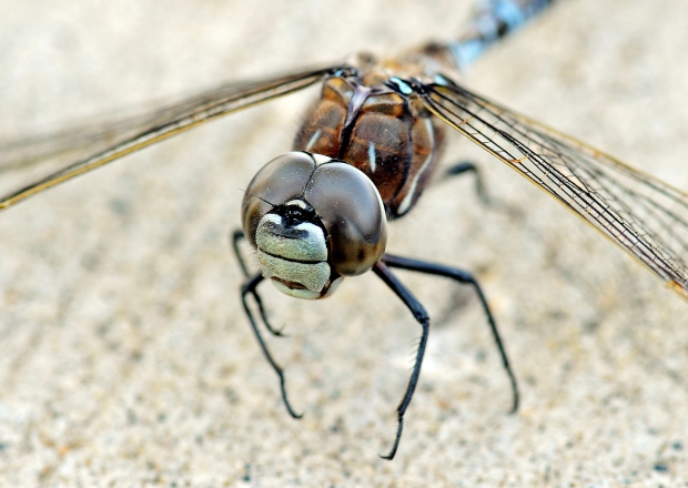 Dragonfly Picture courtesy of the Edmonton Journal