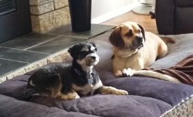Reggie and Dexter