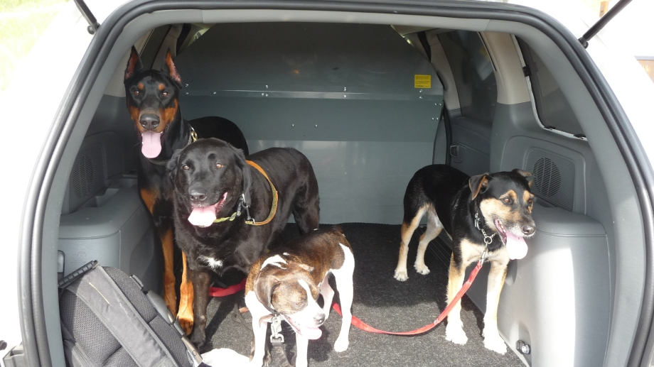 The boys from the Pooch Walk - Thursday am