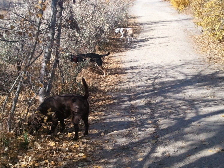 Parked Pooches on the PM Pooch Walk