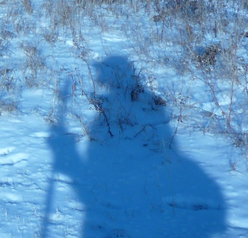 Yeti shadow captured on Nose Hill