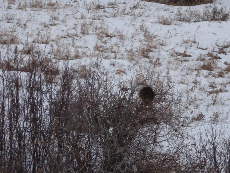 A bird's nest?
