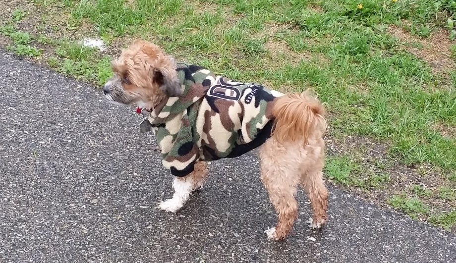 Berkeley and his camo hoodie