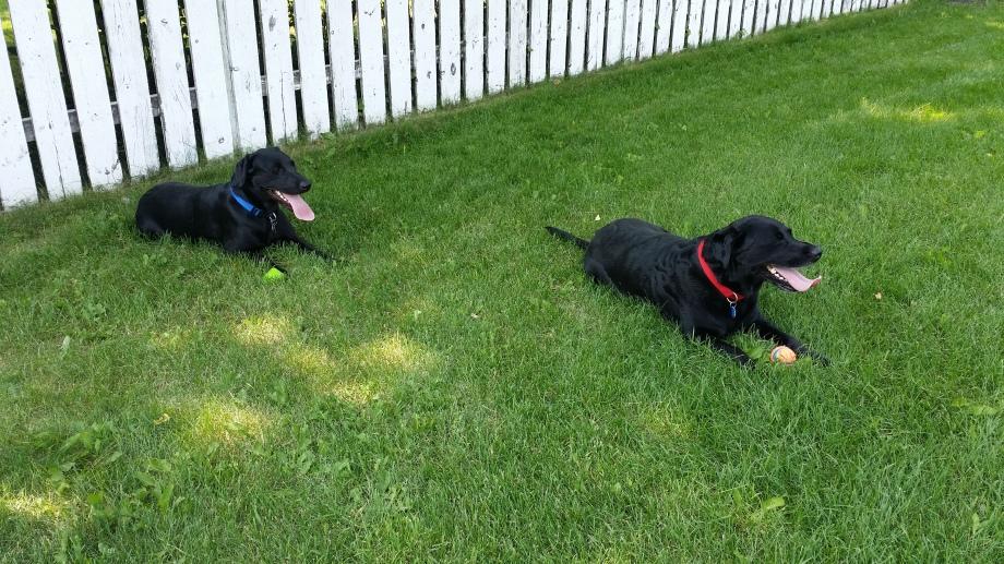 Ruby and Winnie each had a ball...