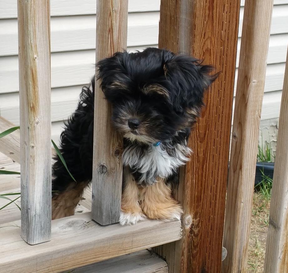 Reggie Pup