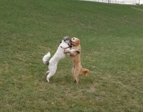 Dancing Pooches