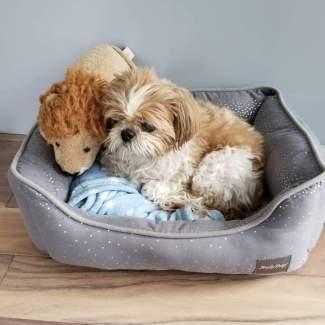 Buddy - a special companion