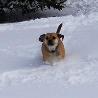 Dexter the snowplow