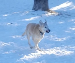 Lucy...stretching her legs...