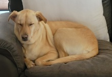 Sleepy Coco
