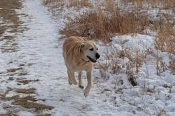 Tucker - on the move
